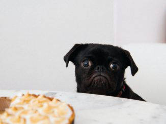 Calorie Restricting